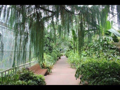 Exploring The Botanic Gardens In Edinburgh