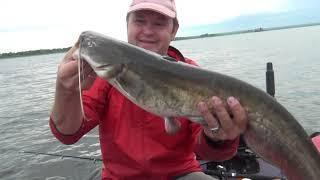 Летняя рыбалка 2021 Сом на квок Бешеный клев не крупного сома Часть 2