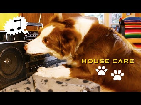 House Care - by Border Collies and an Australian Shepherd!