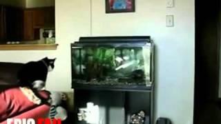 Animal Fail Stupid Cat!