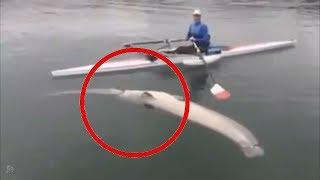 Сом ГИГАНТ подавился Сомом в 1,5 метра. Рыбалка на сома и ловля сома 2019