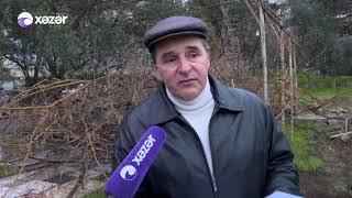 Binəqədi rayonunda ağaclar kəsilib?