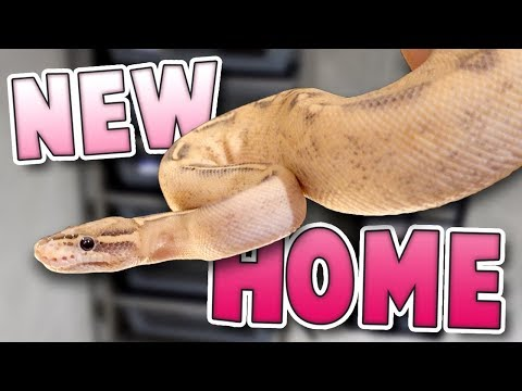 Download Youtube: Brand New Snake Home! | Family Baby Vlogs