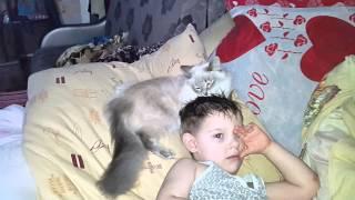 Кошка разбудила сына))