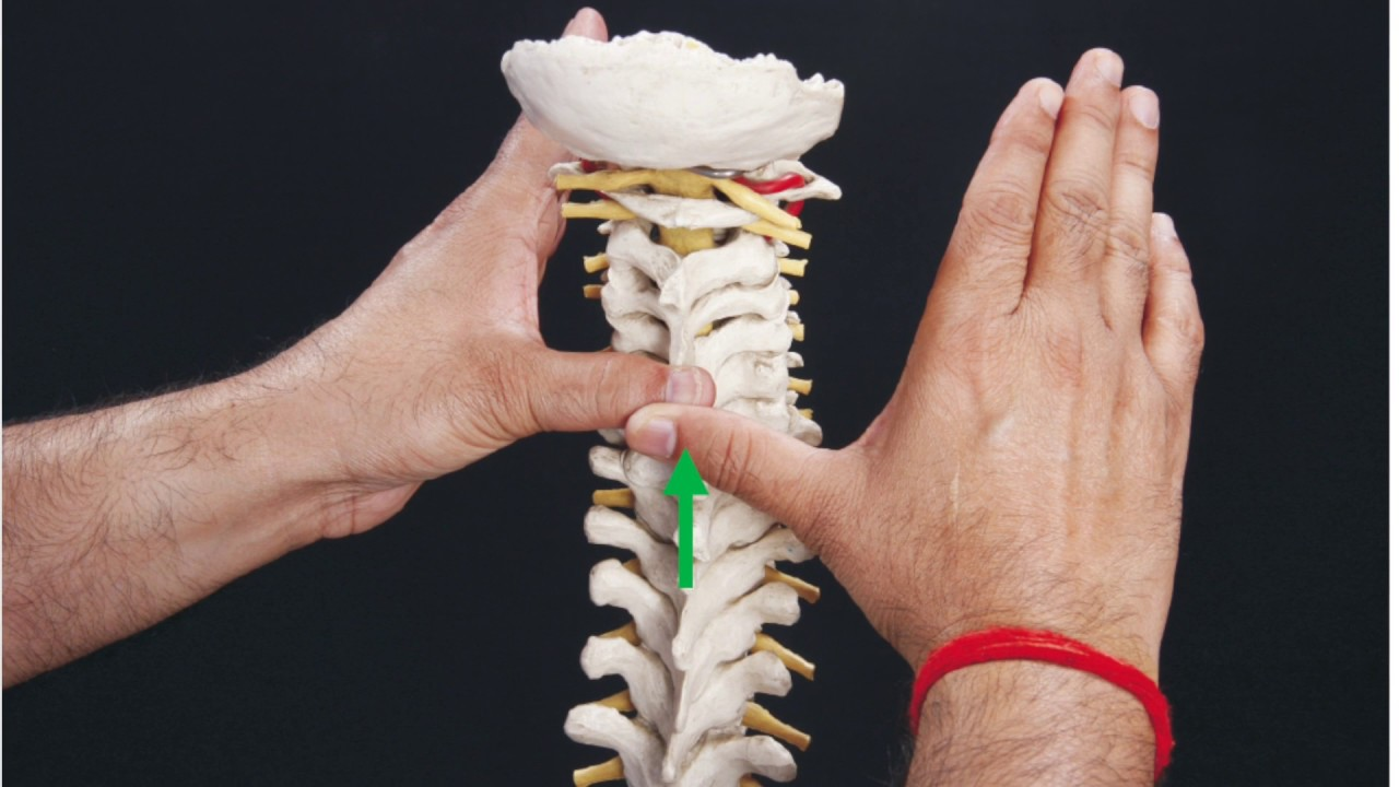 Snags Lower Cervical Spine C3 C7 For Pain Stiffness In Neck
