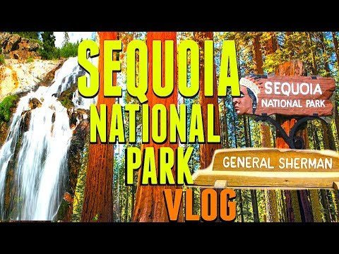 Sequoia National Park | VLOG 2017 4K The General Sherman Tree The Largest Redwood Tree In The World