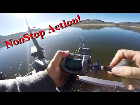 Chasing The Quad! (Nonstop Action On Blue Mesa Reservoir!)