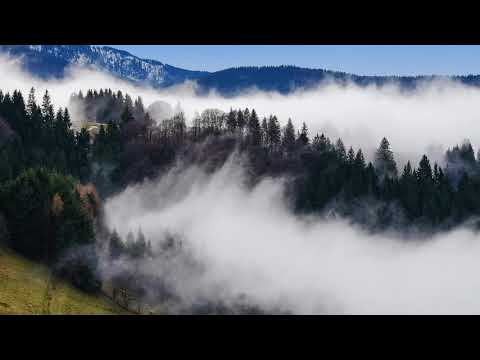 Federico Monachesi - Steaming Forests (Nicolas Rada Remix) Mp3