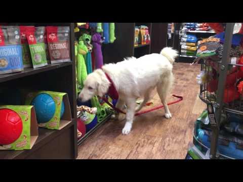 Blind Dog Pal Goes Shopping