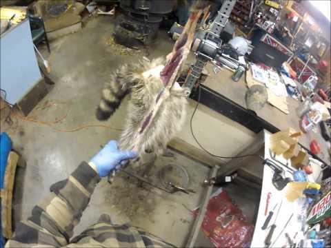 Professional Fur Handling, Raccoon- Part 1 Skinning