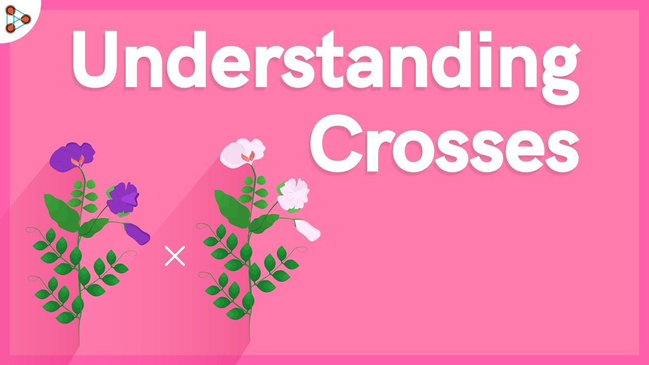Genetics - Understanding Crosses - Lesson 6  | Don't Memorise