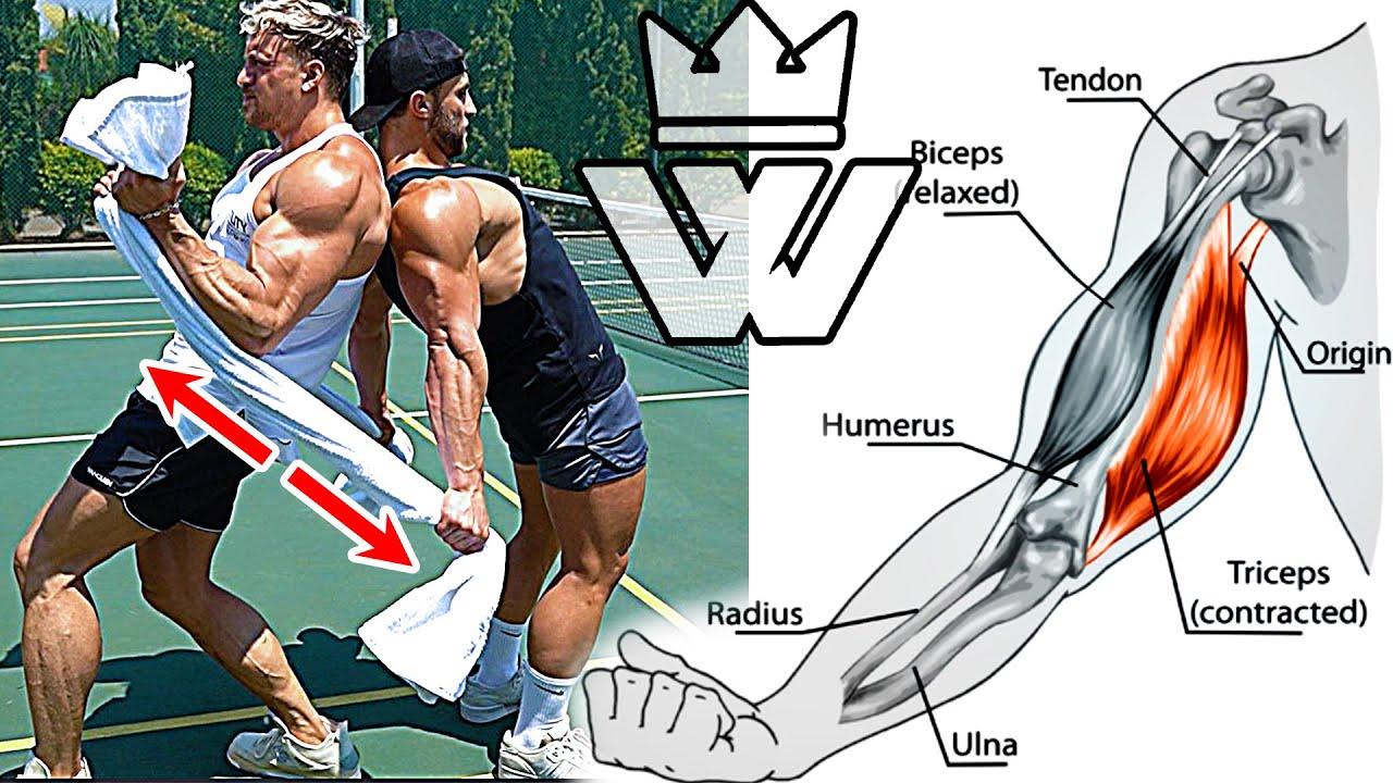 TRAINING At HOME (Biceps Triceps Back Shoulders Legs)