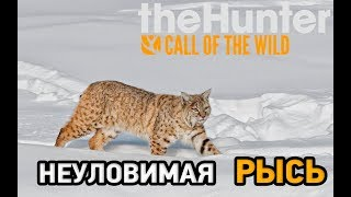 the hunter call of the wild medved taiga # Неуловимая рысь
