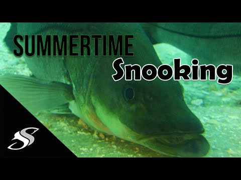 Summertime Snook Fishing on the Beach/Surf