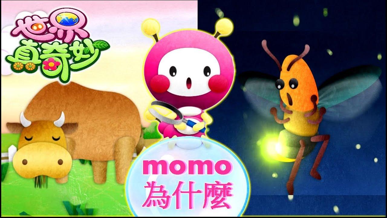 世界真奇妙|【momo為什麼?】為何牛吃完草嘴巴還在動?|為何螢火蟲屁股會發亮? - YouTube
