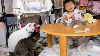 猫ちゃん達と、ヒメちゃんの食事の連鎖について、ふと考えてしまいましたが、気の迷いです。
