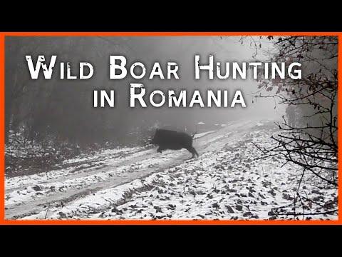 WILD BOAR HUNTING IN ROMANIA 💥🐗🐗🐗 AMAZING!!!