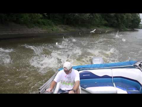 Asian Carp Wabash River HD Short