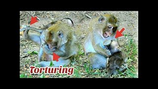 Mom Torturing Baby monkey too Hard, Baby monkey Cry very Loud