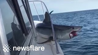 Huge mako shark jumps onto fishing boat