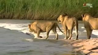 Afrikas gefährliche Flüsse Doku über Afrika in HD Teil 1