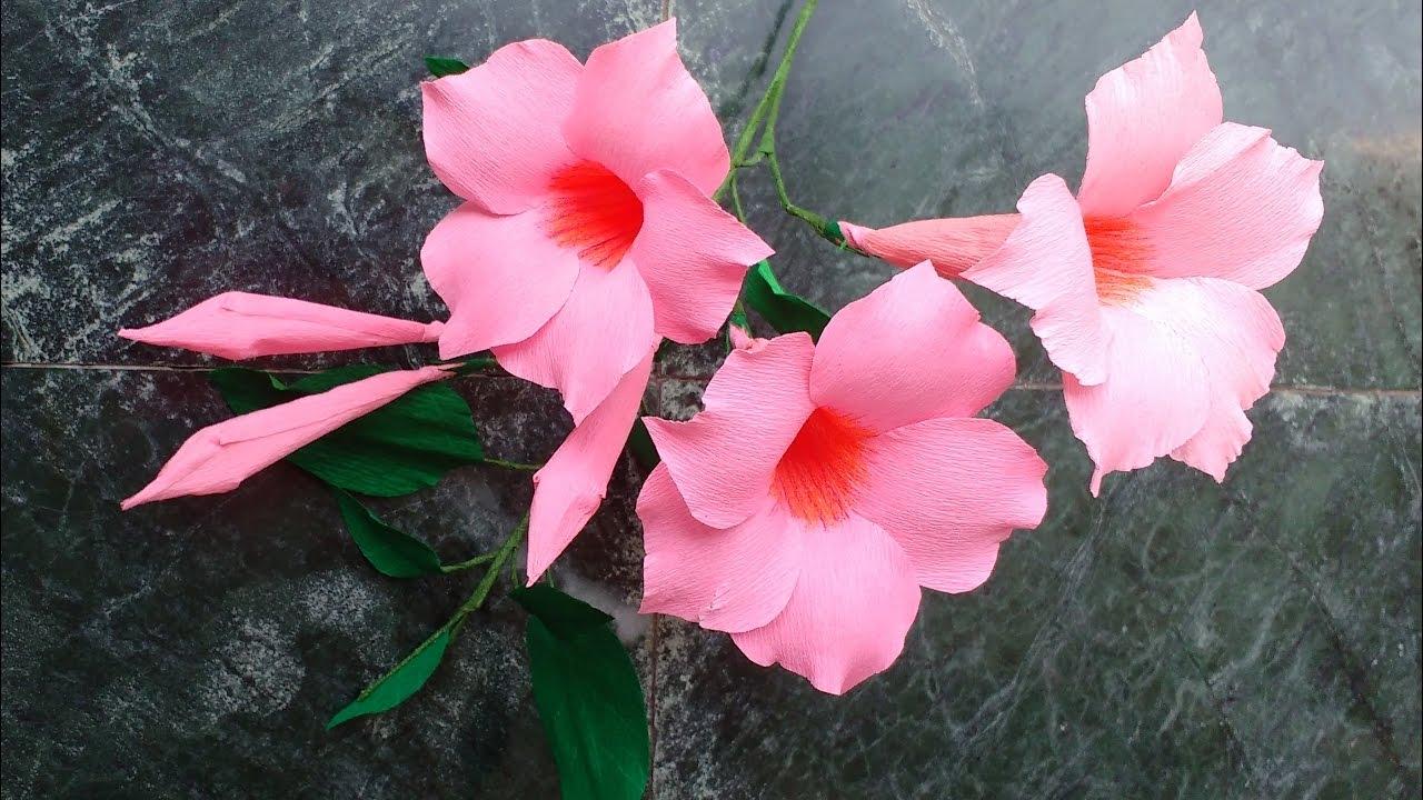 How To Make Paper Flowers Mandevilla Rocktrumpet Flower 123