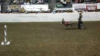 Equine Affaire Fantasia 2009 Part 5