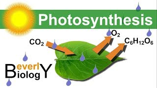 Photosynthesis (in detail)