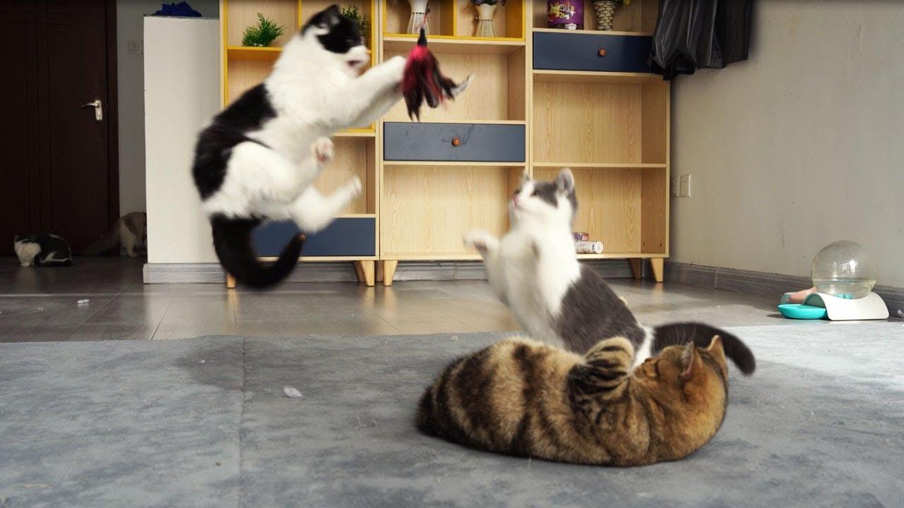 Cat's Life Video|Cats Interactive|Best Cats Interactive