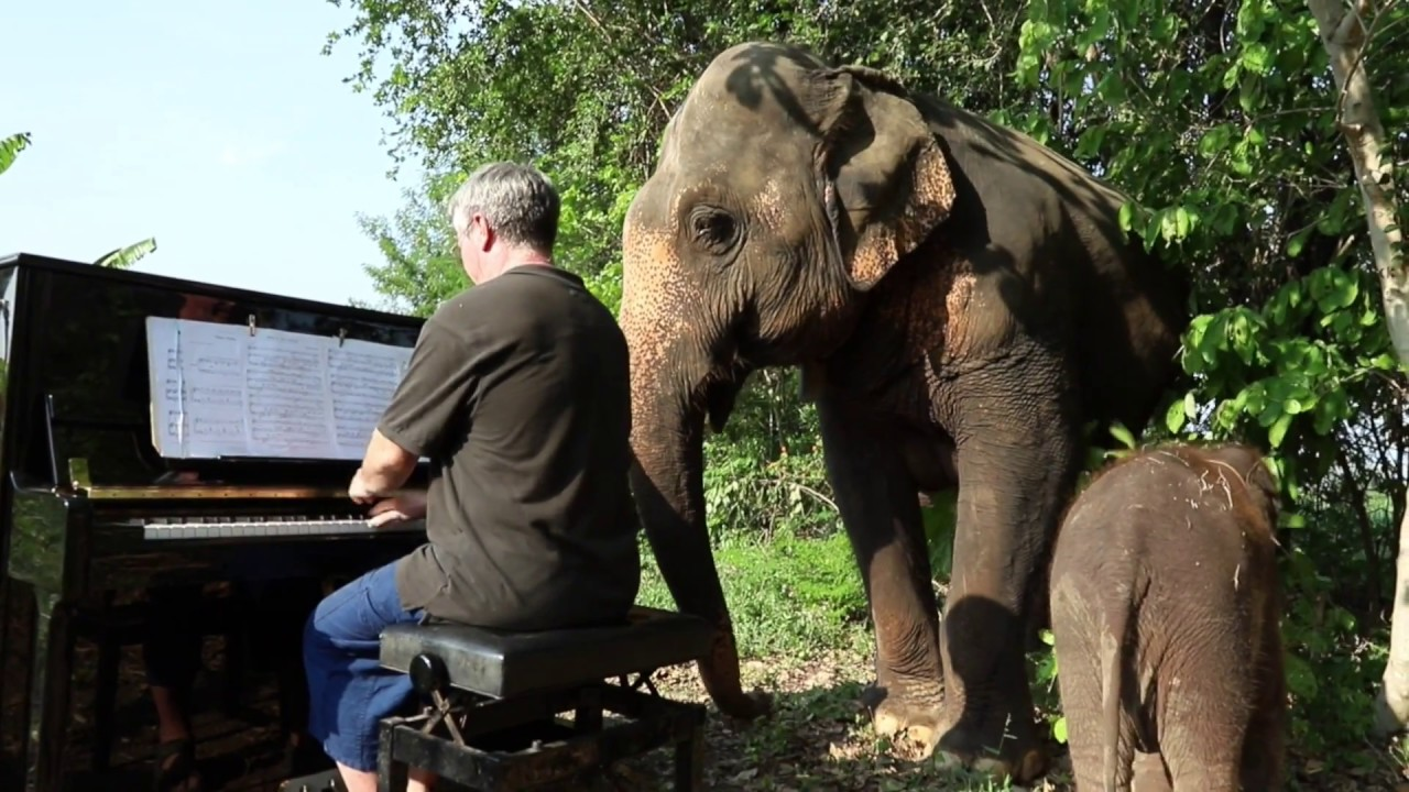 Piano For Mother And Baby Elephant Vlog 3 Youtube