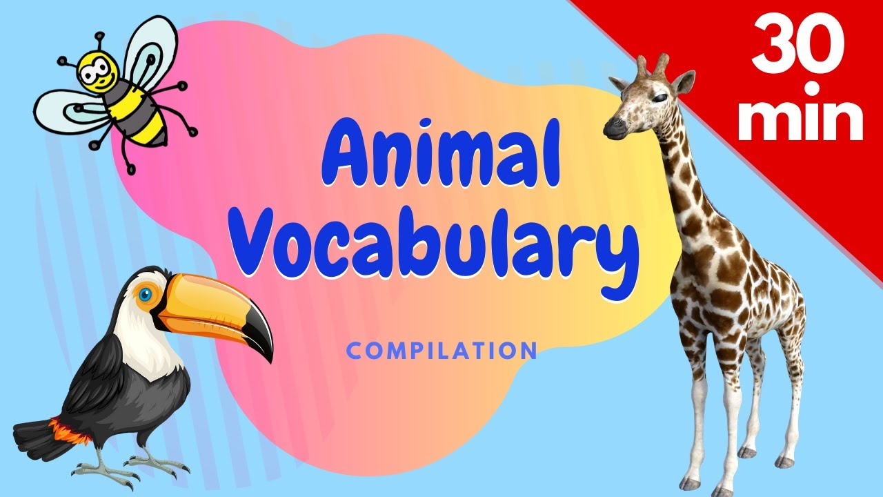 Super Animal Vocabulary Compilation: Zoo Animals, Birds, Bugs, Water Animals, Animal ABC, and more.