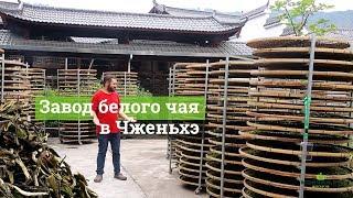 видео Чай Гун Мэй