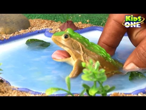 Learn INSECTS Names And Sounds for Children | Kids Learning Videos Teaches Animals