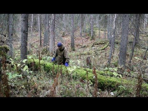 видео: Мини балаган и печка (2 день)