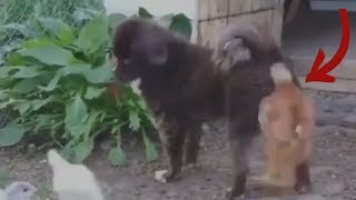 ANIMALS ARE IDIOTS - Super Funny Animals Compilation