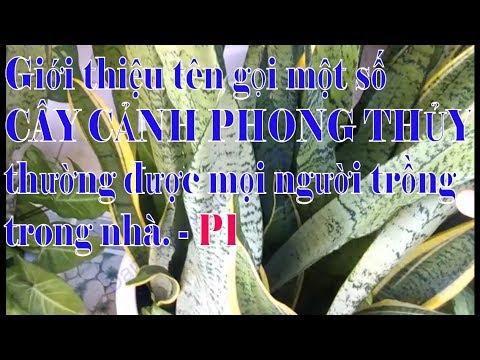 Giới thiệu tên gọi một số loại CÂY CẢNH PHONG THỦY mà nhiều người hay trồng trong nhà – P1