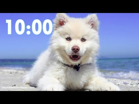 Cutest Dog 10 Minute Timer?Relaxing Music - Puppy Bark Alarm ((‹?