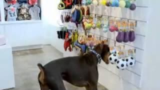 Funny Fur Pet Supplies Store & Boutique