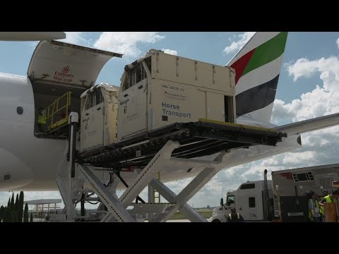 The world's largest commercial air charter of horses   Emirates SkyCargo