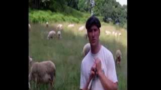 Témoignage d'agriculteurs sur le portage du foncier avec la Safer GHL