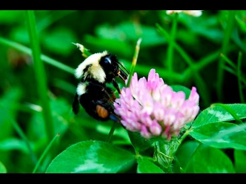 bees love flowers.  really.