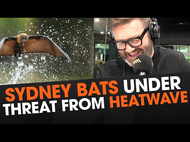 15,000 Sydney Bats Need Sprinklers To Keep Cool This Summer    Triple M
