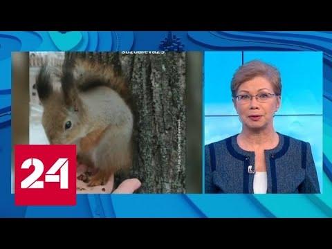 'Погода 24': европейскую часть России накрыла оттепель - Россия 24 - Видео онлайн