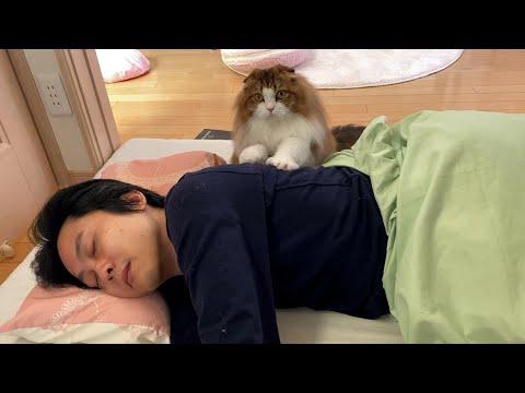 お疲れパパの肩から腰をもみもみマッサージしてくれる猫