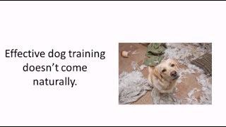 Secrets To Dog Training - Dog Obedience Training To Solve Dog Behavior Problems