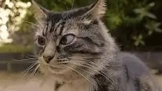 Клёвый кот чувствует жопой
