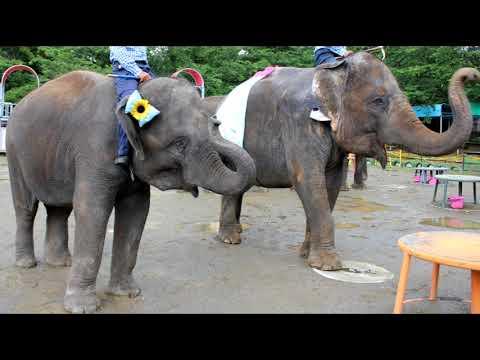 日本生まれのゾウ初めての繁殖を目指して!アジアゾウ「ゆめ花」沖縄へ出発します!