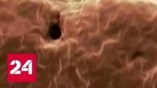 Стволовые клетки - путь к молодости