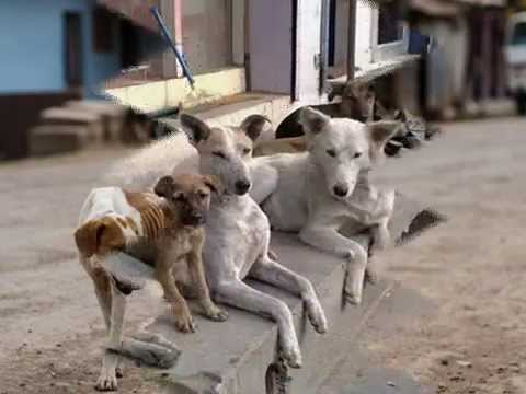 THE SAD STORY OF STRAY DOGS - YouTube
