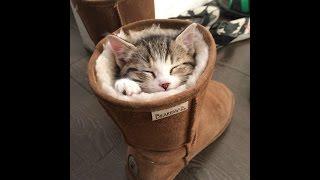 Как необычно кошки спят! Смешное видео с кошками! Не пропустите!